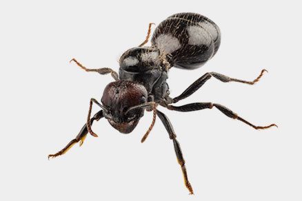 Ants and how to control infestations