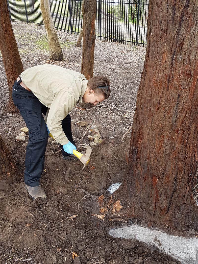 Trenching Tree