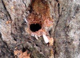 Termite Tree Treatment