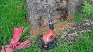 Termite Tree Treatment