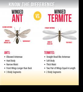 Ant and Termite Pest Control