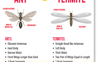 Ant and Termite Pest Control